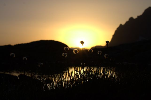 Sonnenuntergang mit Blumen, © Adolf-Nossberger-Hütte