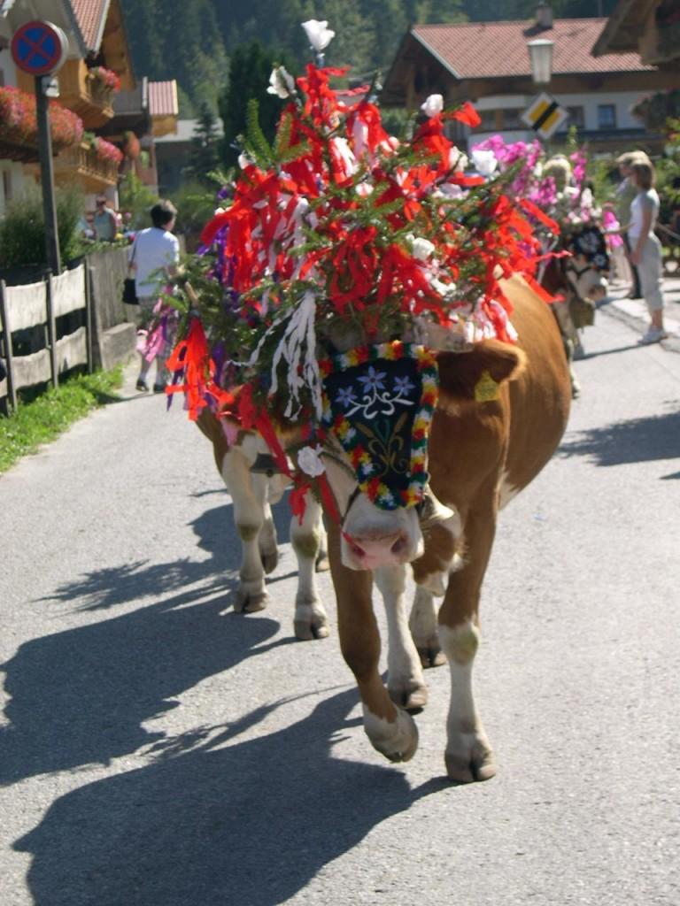 Geschmückte Kuh Almabtrieb Wildschönau