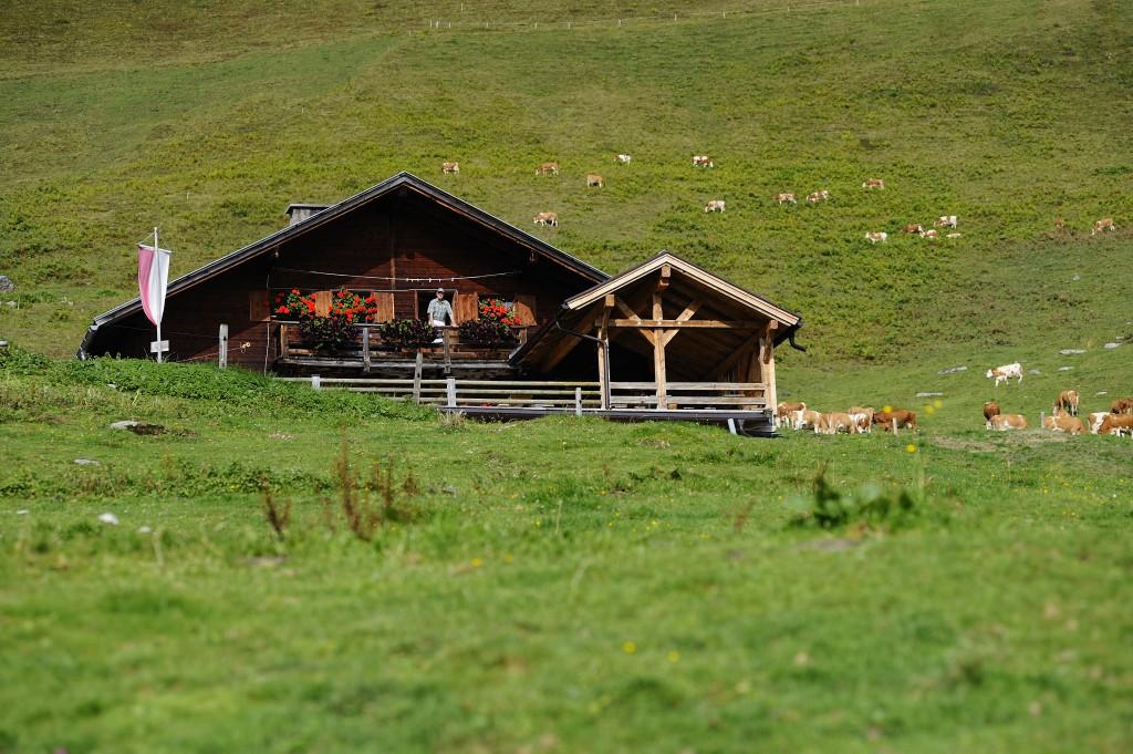Holzalm Käsealm Wildschönau