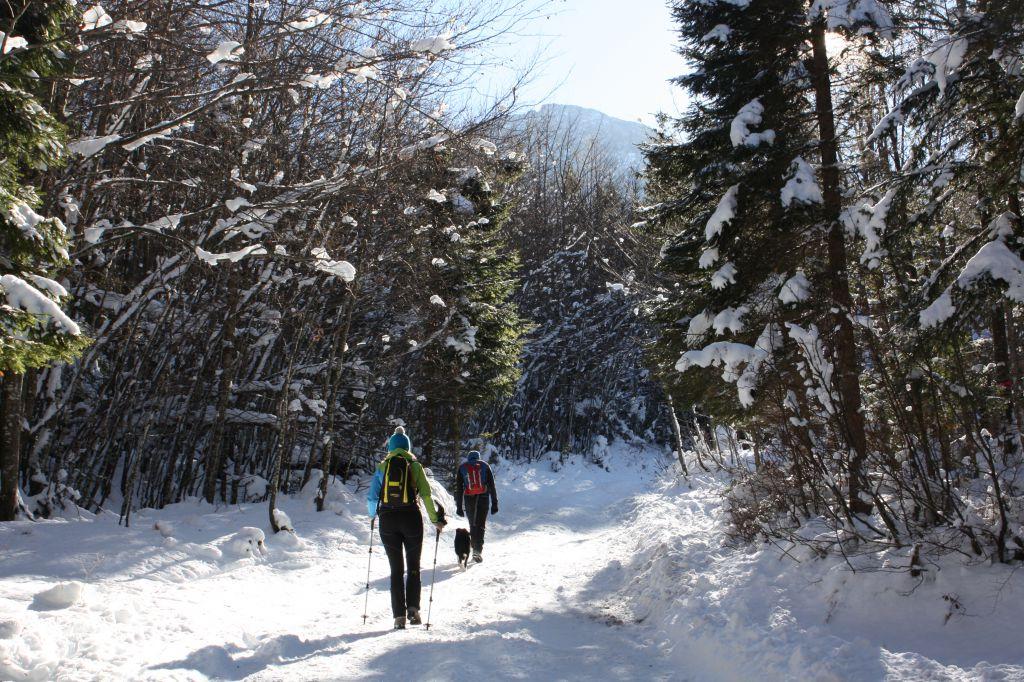Winterwandern mit Hund, © Österreichs Wanderdörfer, Corinna Widi