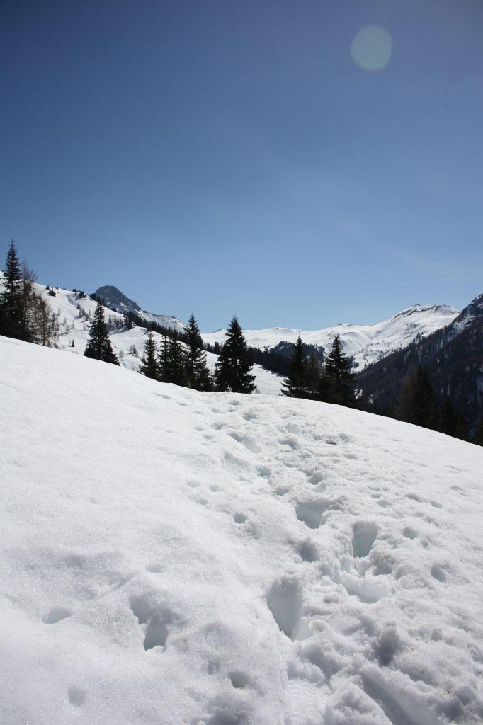 Verschneiter Weg zur Loosbühelalm, © Österreichs Wanderdörfer, Corinna Widi