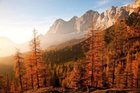Wald © Reinhard Lamm