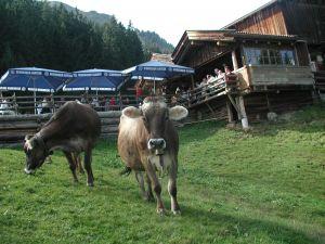 Frankalm, TVB Kitzbüheler Alpen-Brixental, Eva Hirzinger