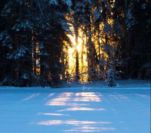 Schneedecke, Pexels